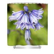 Spanish Bluebells 7 Shower Curtain