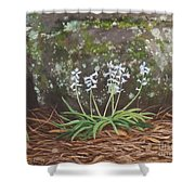 Spanish Bluebells Shower Curtain