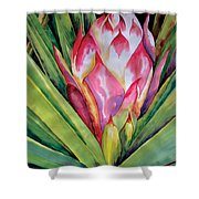 Spanish Dagger Iv Shower Curtain