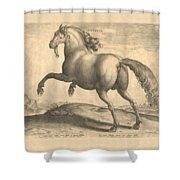 Spanish Horse Renaissance Engraving Shower Curtain