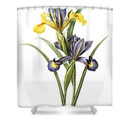 Spanish Iris Shower Curtain