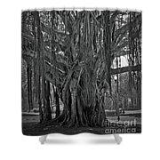 Spanish Moss Of The Tree Shower Curtain