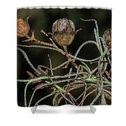 Spanish Moss On Azalea  Shower Curtain