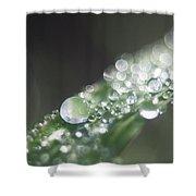 Sparkling Dew Shower Curtain