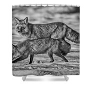 Sparkling Eyes Bw Shower Curtain