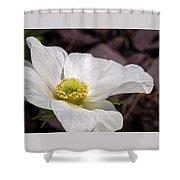 Sparkling White Anemone Shower Curtain