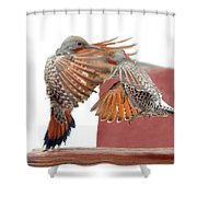 Sparring Flickers Shower Curtain