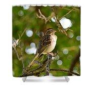 Sparrow-1 Shower Curtain