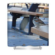Sparrow 2 Shower Curtain