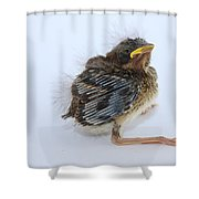 Sparrow Chick Shower Curtain