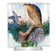 Sparrow Hawk Antique Bird Print Joseph Wolf Birds Of Great Britain  Shower Curtain