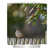 Sparrow In Colonial Williamsburg Shower Curtain