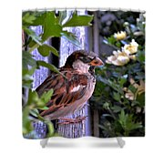 Sparrow In The Shrubs Shower Curtain