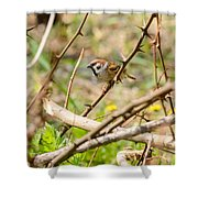 Sparrow In The Thorns Shower Curtain