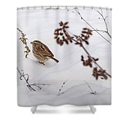 Sparrow In The Winter Snow Shower Curtain