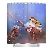 Sparrow In Winter Shower Curtain