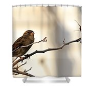 Sparrow On A Limb Shower Curtain