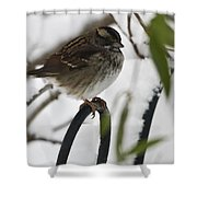 Sparrow On Fence Shower Curtain