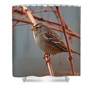 Sparrow On Grape Vine Shower Curtain