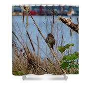 Sparrow On The Cattails Shower Curtain