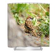 Sparrow On The Ground Shower Curtain
