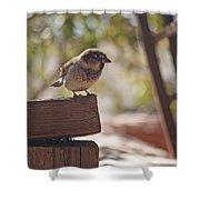 Sparrow. Shower Curtain