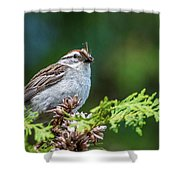 Sparrow With Lunch Shower Curtain
