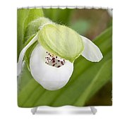 Sparrow's-egg Orchid  Shower Curtain