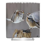 Sparrows Fight Shower Curtain