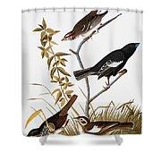 Sparrows Shower Curtain by John James Audubon