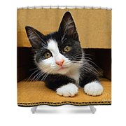 Special Delivery Tuxedo Kitten Shower Curtain