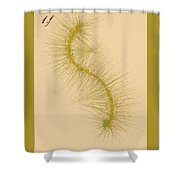 Species Number One F Shower Curtain