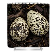 Speckled Killdeer Eggs By Jean Noren Shower Curtain