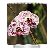 Speckled Orchids Shower Curtain