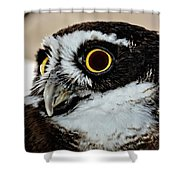 Spectacle Owl Shower Curtain