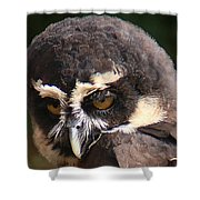 Spectacled Owl Portrait 2 Shower Curtain
