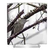 Spectacled Visitor Shower Curtain