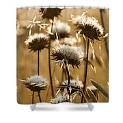 Spent Flowers In The Field Shower Curtain