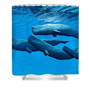Sperm Whale Family Shower Curtain