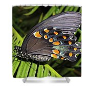 Spicebush Swallowtail Butterfly Shower Curtain