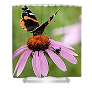 Spider And Butterfly On Cone Flower Shower Curtain
