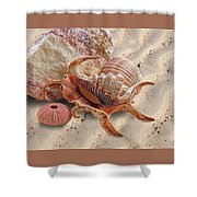 Spider Conch Shell On The Beach Shower Curtain