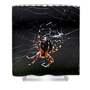 Spider Shower Curtain