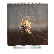 Spider In Wait Shower Curtain