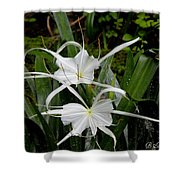 Spider Lilies Shower Curtain