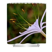 Spider Lilly Flower 2 Shower Curtain