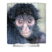 Spider Monkey Face Shower Curtain