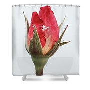 Spider On A Rose Shower Curtain