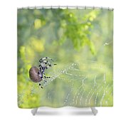 Spider On Web Shower Curtain