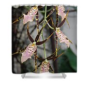 Spider Orchids Shower Curtain